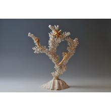 Il ramo di corallo madrepora su tridacna